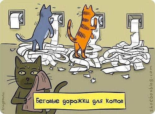 Беговые дорожки для котов